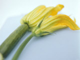 Courgette Flowers: Female with Fruit and Male with Stalk Photographic Print