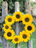 A Wreath of Sunflowers Hanging on a Fence Photographic Print by Alena Hrbkova
