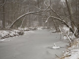 Winter View of Rock Creek, A Tract of Nature in the Nation's Capital Photographic Print by Stephen St. John