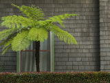 Window of Building with a Green Fern Tree in Front, Santa Barbara, California Photographic Print by James Forte