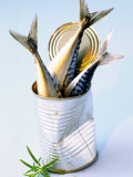 Three Fish (Mackerel) in a Tin Photographie par Marc O. Finley