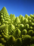 Close up of Romanesco Photographic Print by Peter Sapper
