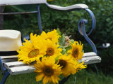 Sunflowers on a Garden Chair Photographic Print by Roland Krieg