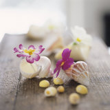 Alena Hrbkova - Primroses in Empty Snail Shells - Fotografik Baskı