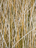 Wild Grass on Chesapeake Bay Shore Fotografisk tryk af David Evans