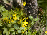 Yellow Flowers, Lichen, and Undergrowth on Floor of Chinese Forest, Shennongjia, China Photographic Print by David Evans