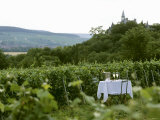 Table with Champagne Glasses in Vineyard in Champagne Photographic Print by Joerg Lehmann