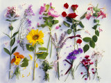 Various Summer Flowers, Clearly Arranged Photographic Print by Roland Krieg