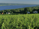 Vineyard Along the Finger Lakes Photographic Print by Kenneth Garrett