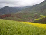 Village Nestled in a Valley and Fields of Wheat and Rape Flowers, Qinghai, China Photographic Print by David Evans