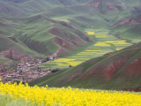Village Nestled in a Valley and Fields Wheat and Flowering Rape, Qinghai, China Fotografisk tryk af David Evans
