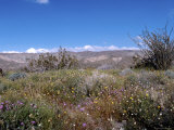 Wild Flowers in Desert Park, California Photographic Print by James Forte
