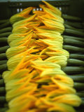 Courgette Flowers on a Market Stall Photographic Print by Marc O. Finley