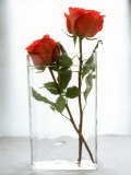 Two Red Roses in a Glass Vase Photographic Print by Michael Paul