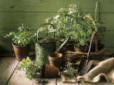 Still Life with Various Herbs in Pots Photographic Print by Gerrit Buntrock