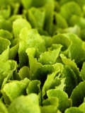 Loose-Leaf Lettuce Photographic Print by Dirk Olaf Wexel