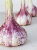 Three Fresh Garlic Bulbs Photographic Print by Linda Burgess
