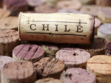 Wine Corks from Chile Photographic Print by Frank Tschakert