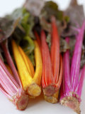 Rainbow Chard Photographic Print by Sebastian Vogt