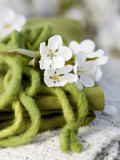 Cherry Blossom on a Felted Cord Photographic Print by Sara Deluca