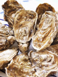 Fresh Oysters Photographic Print by Alain Caste