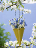 Spring Flowers in Hanging Vase on Flowering Cherry Tree Photographic Print by Friedrich Strauss