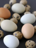 Quails' Eggs and Hens' Eggs Fotografisk trykk av Sebastian Vogt