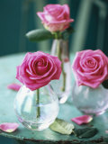 Three Pink Roses in Vases on a Garden Table Photographic Print by Michael Paul