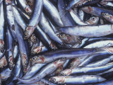 Sardines on a Market Stall in Aix-en-Provence, France Photographic Print by Hans-peter Siffert