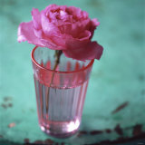 Pink Rose in a Pink Glass Photographic Print by Michael Paul