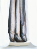 Four Smoked Eels in a Box Fotografie-Druck von Peter Medilek