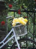 Yellow Roses in Bicycle Basket, Red Climbing Roses Behind Photographic Print by Alena Hrbkova