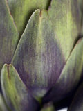 An Artichoke Photographic Print by Herbert Lehmann