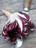 Radicchio Trevisano on a Knife Photographic Print by Marc O. Finley