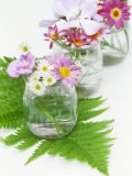 Geraniums and Chrysanthemums in Jars with Fern Photographic Print by Linda Burgess