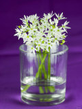 Ramsons (Wild Garlic) Flowers in a Glass Photographic Print by Sara Jones