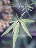 Wild Growing Hemp Photographic Print by Brigitte Sporrer