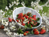 Fresh Strawberries in Sieve Surrounded by Sloe Blossom Photographic Print by Martina Schindler
