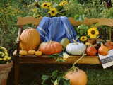 Pumpkin Still Life on Wooden Bench in Country Garden Photographic Print