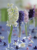 Hyacinths in Glasses as Table Decoration Photographic Print by Friedrich Strauss