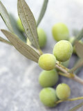 Olive Sprig with Green Olives Photographic Print by Brigitte Sporrer