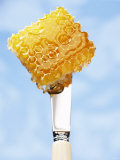 A Piece of Honeycomb on a Knife Photographic Print by Marc O. Finley