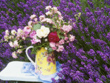 Roses on a Stool in a Field of Lavender Photographic Print by Linda Burgess