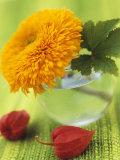 Sunflower (Variety Teddy Bear) in Glass Vase, Chinese Lanterns Photographic Print by Vladimir Shulevsky