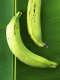 Two Plantains on a Banana Leaf Photographic Print by Armin Zogbaum