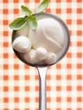 Mozzarella with Basil in Ladle Photographic Print by Marc O. Finley
