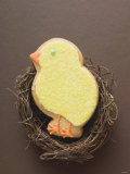 Easter Biscuit (Yellow Chick) in Easter Nest Photographic Print