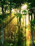 Sonnenstrahlen fallen durch das Laub der Bäume Fotodruck