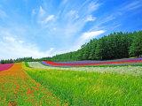 Giardino in fiore con sentiero Stampa fotografica