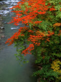 Autumn Leaves Over the River Photographic Print